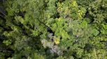 Daintree Rainforest canopy