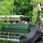 Half-Day tours, Port Douglas, has some awesome options  Starting with visiting Hartley's Crocodile farm to get up close to some of the big crocs. As well as crocodiles Hartleys has snakes, kangaroos and cassowaries. This is a quality educational attraction sure to please the whole family.  Next, fishing is a real treat in Port Douglas, with the best-eating fish in the world.  Relaxing on a tropical island may be more your style, and if it, Low Isles is a great option.  Then go horseriding along the beach.  Spend a while at the Port Douglas zoo and meet some of our Australian animals.