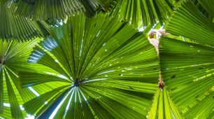 Port Douglas Reef tour and Daintree Rainforest