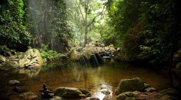 Daintree on a Budget