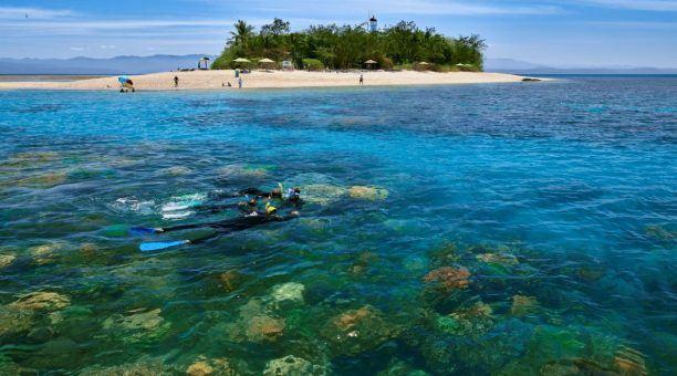 Snorkelling Low Isles Lagoon